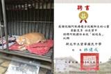 Cat is the Deputy Principal  of High Schools in Taiwan