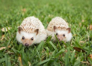 Sammlung der schönsten Igelbilder - schimmernde schöne Fotos mit dem Titel Happy Hedgehog
