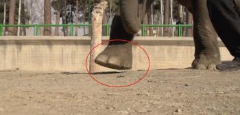 Cosa succede allHTC Desire EYE quando un elefante lo calpesta?