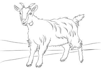 Çocuklar için keçi en komik boyama resimleri koleksiyonu