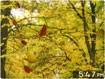 Golden Leaves 3D Screensaver