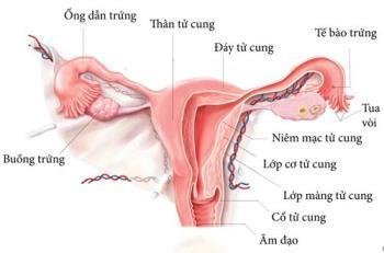 Lebensmittel, die die dünne Gebärmutterschleimhaut verbessern, tragen zur Steigerung der Fruchtbarkeit von Frauen bei