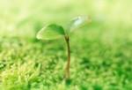 World Tree Preservation