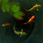 Koi Fish 3D For Android