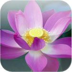 Tibetan Buddhist learning letter for iOS