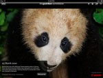 The Guardian Eyewitness iPad for