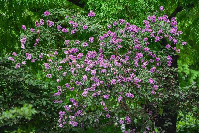 Фиолетовые фиолетовые красивые цветы