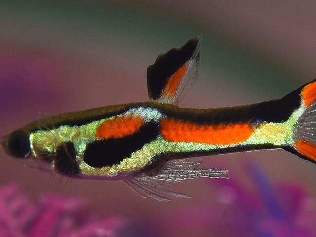 Ringkasan beberapa gambar akuarium yang indah