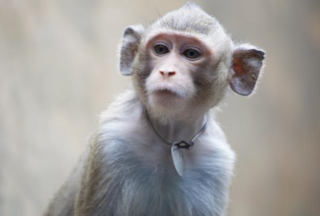 مجموعه تصاویر بسیار زیبا و برش خورده میمون