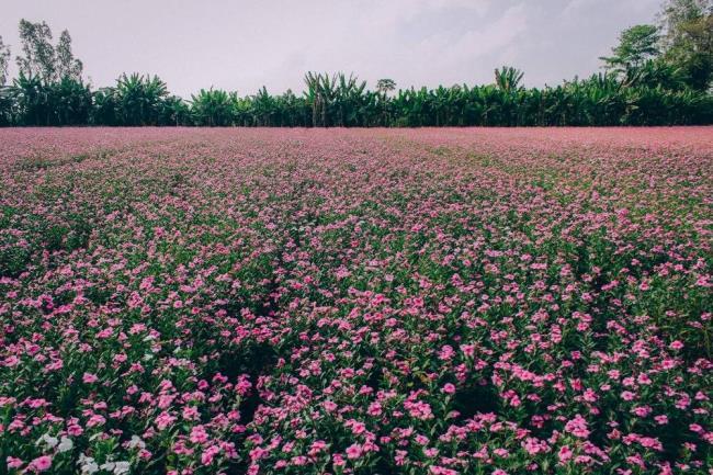 خلاصه ای از زیباترین تصاویر مربوط به دورچه