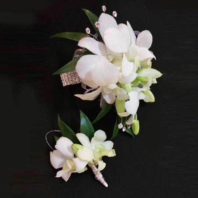 Zusammenfassung der schönsten Orchideenbilder