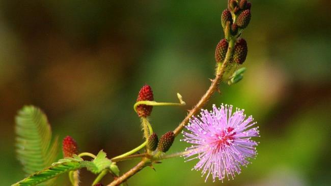 Belles images de fleurs vierges