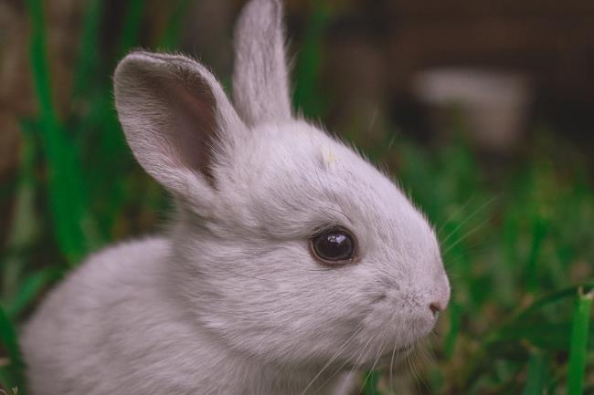 ملخص أجمل صورة أرنب ولطيف