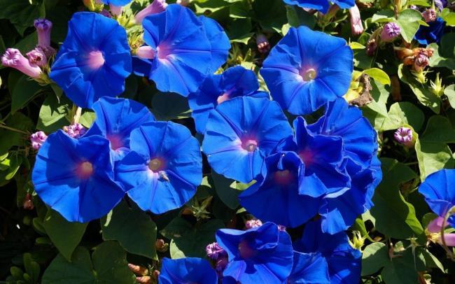 Ciri-ciri bunga narsisis