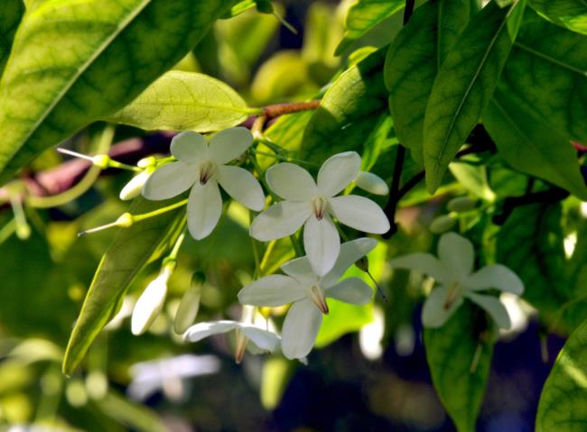 Synthesis of the most beautiful projection of apricot flowers