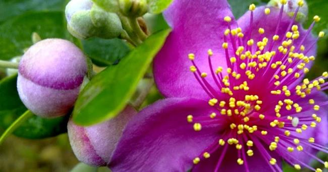 Resumo das mais belas fotos de flores sim