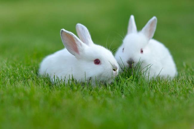 Zusammenfassung des schönsten und niedlichsten Kaninchenbildes