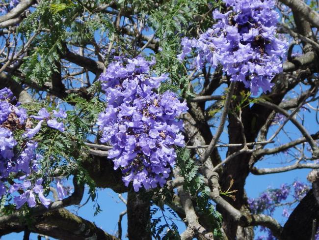 Коллекция самых красивых фиолетовых цветов феникса