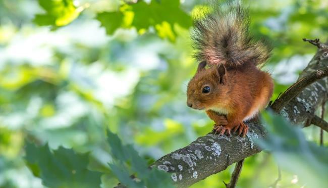 Sammlung der schönsten Eichhörnchenbilder