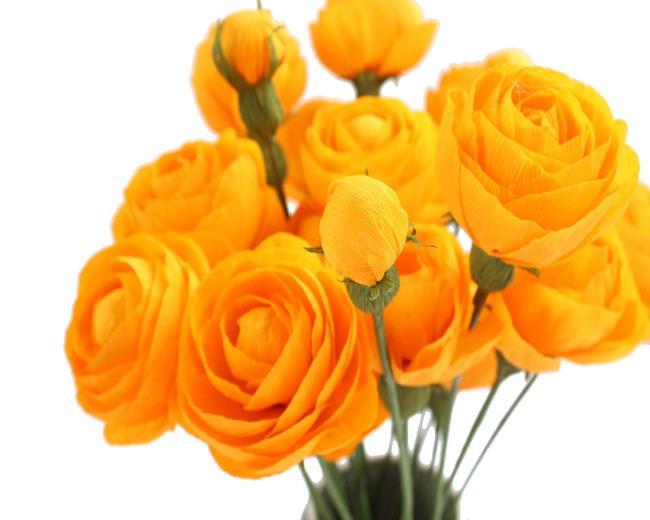 Schönes gelbes Pfingstrosenbild