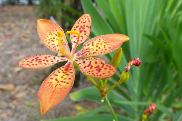 Resumo da mais bela flor de petiscos