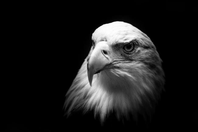 सबसे सुंदर ईगल छवियों का सारांश