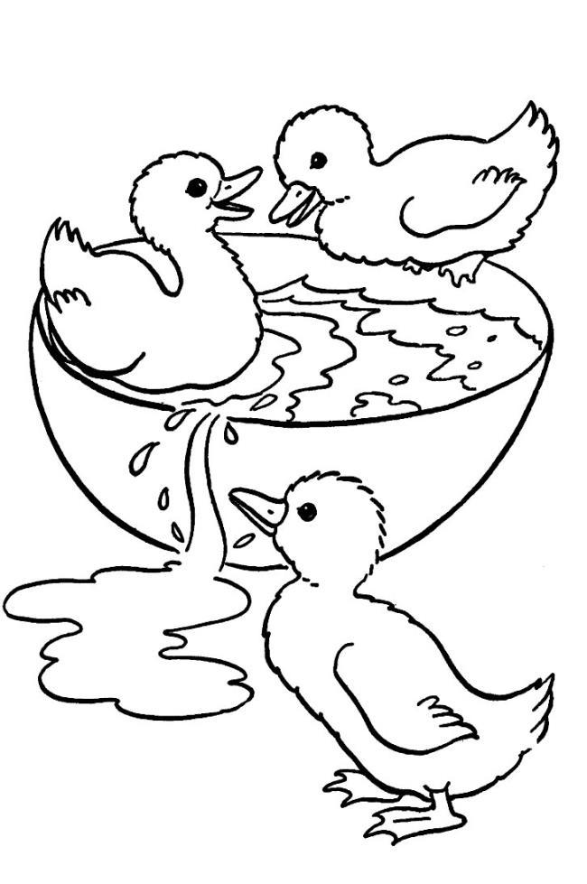 Sammlung der schönsten Entenmalbilder
