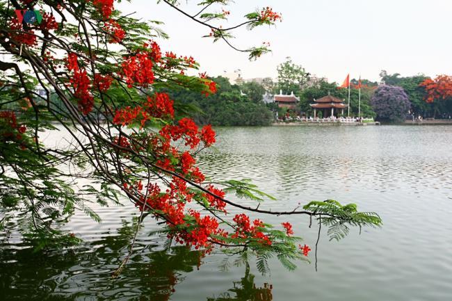 Rezumatul celor mai frumoase imagini cu flori roșii de fenix