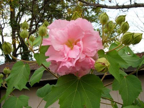 सबसे सुंदर फूलों की छवियों का मेल