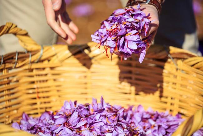 सबसे सुंदर केसर के फूलों की छवियों का संयोजन
