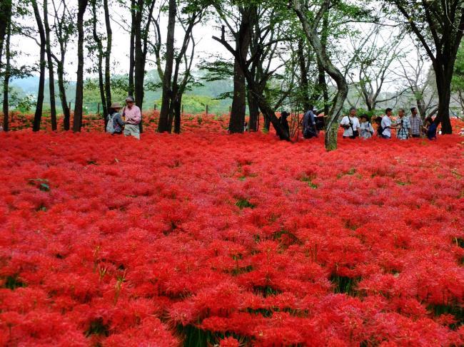 सबसे सुंदर लाल धनिया फूलों का संग्रह