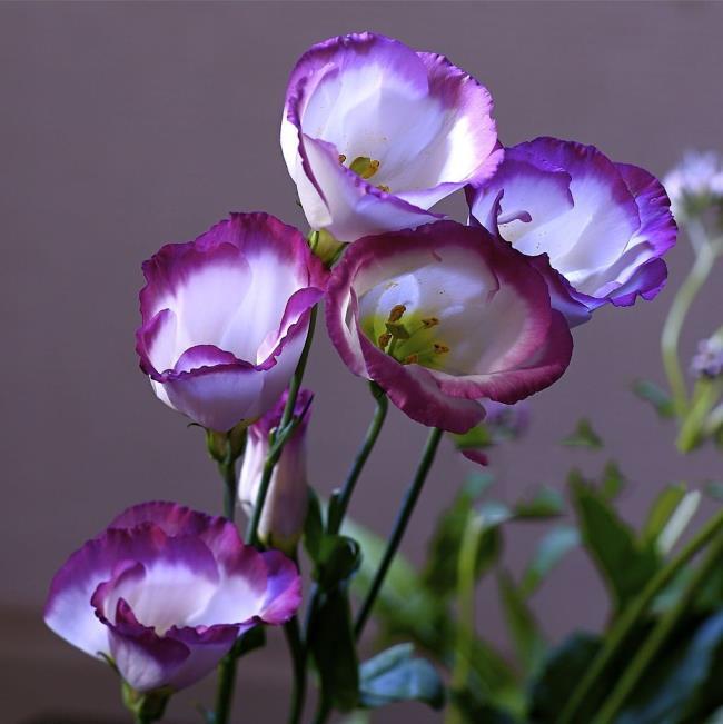Краткое описание самой красивой стены орхидеи