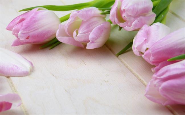 Kombinieren Sie Bilder der schönsten Blütenknospen