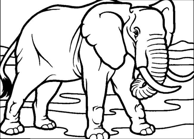 Verzameling van de mooiste olifant kleurplaten