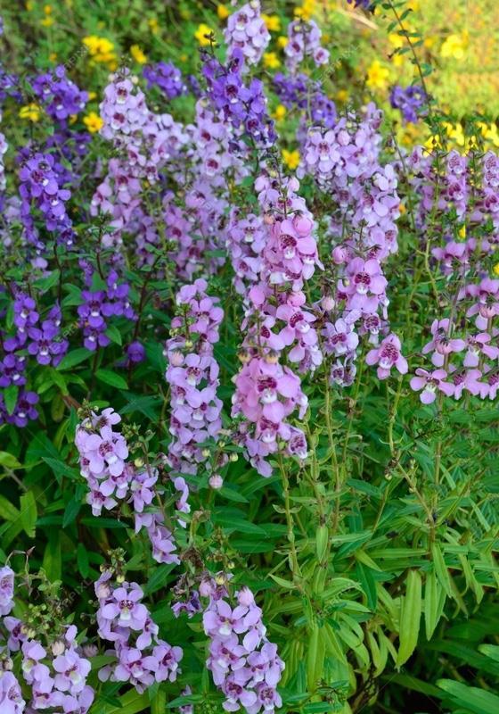Ringkasan bunga wisteria yang paling indah