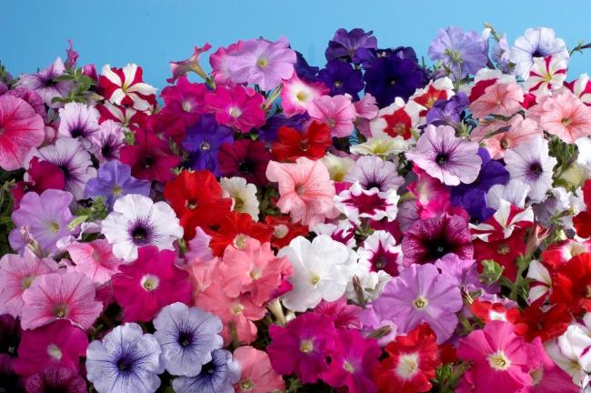 Beautiful draft flowers images