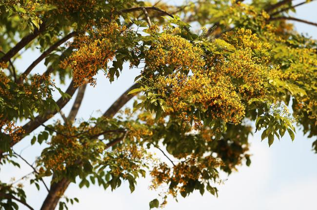 Belle image de fleur de lait d'automne