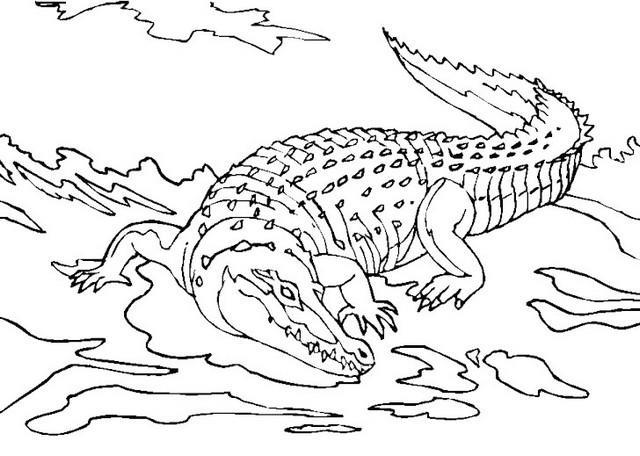 ملخص صور تلوين التمساح للطفل لممارسة التلوين