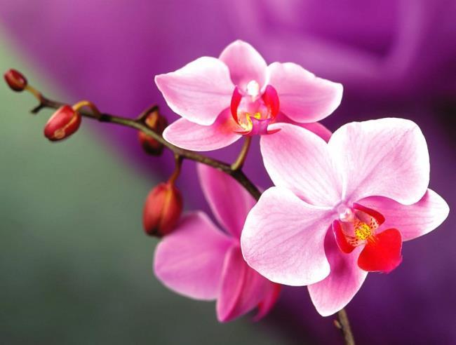 Bedeutung von Orchideen