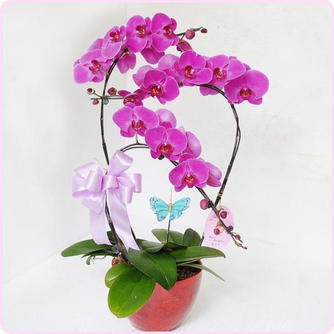 Schöne lila Orchideenbilder 3