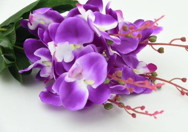 Schöne lila Orchideenbilder 5