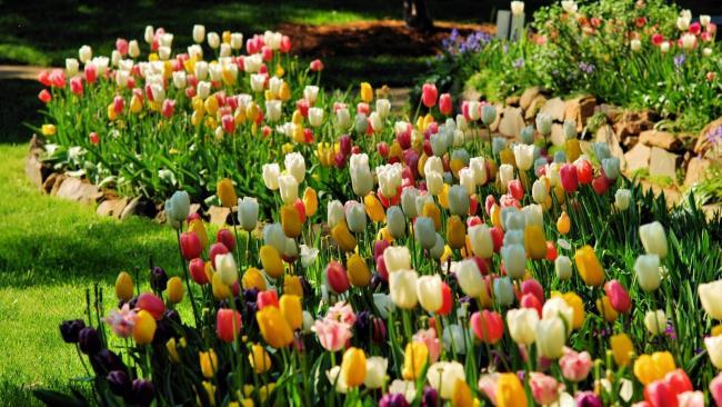 सबसे सुंदर फूल वॉलपेपर का संग्रह
