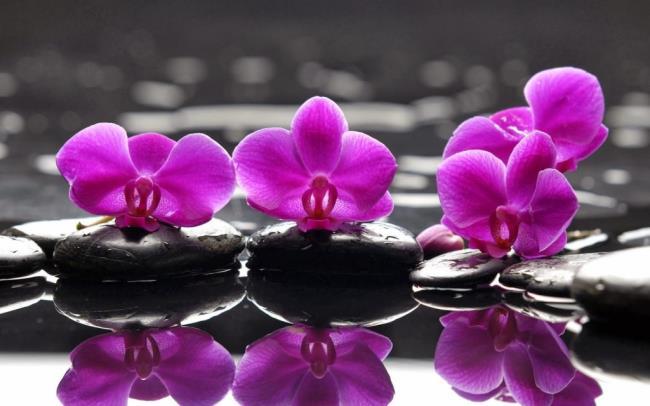 Schöne lila Orchideenbilder 7