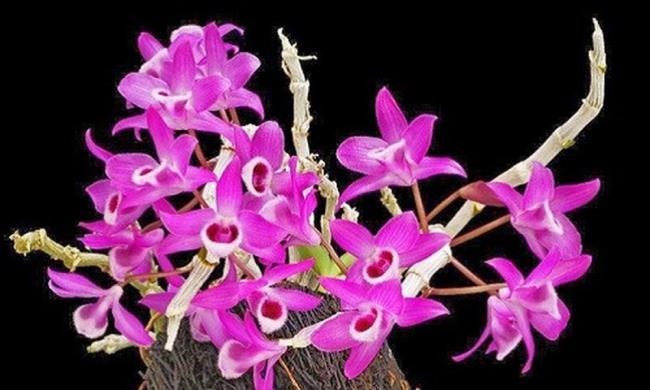 Schöne lila Orchideenbilder 9