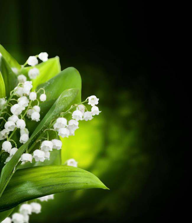 Die schönen Orchideenglockenbilder 18