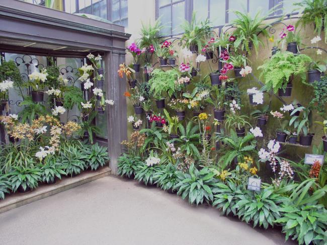 Die schönen Orchideenwandbilder 21