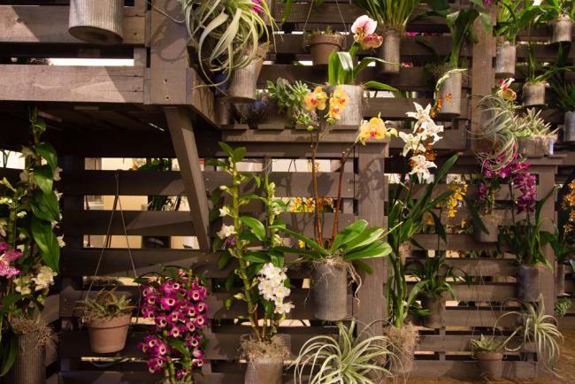 Die schönen Orchideenwandbilder 22