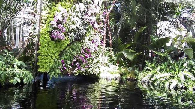 Schöne Wandorchideenbilder 23