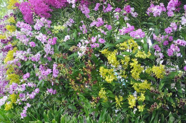 Die schönen Orchideenwandbilder 25