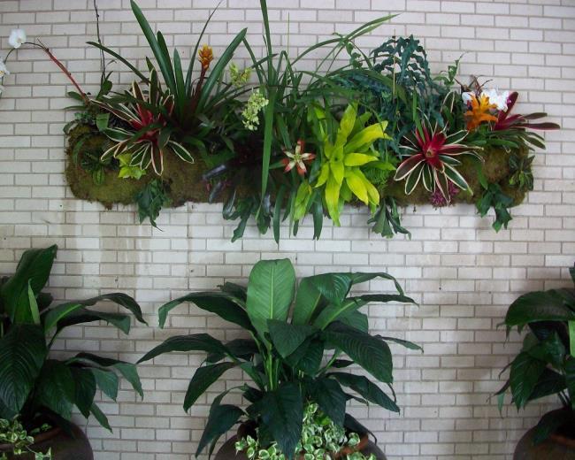 Die schönen Orchideenwandbilder 26